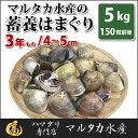 【送料無料】【業務用】大人買い蓄養はまぐり 3年もの4cm〜5cmサイズ蛤(ハマグリ)5kg(150粒前後)入