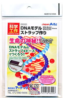 Elementary school junior high school science biology DNA structure learning fun fun educational toys gifts colorful beads