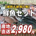【福井のおさかな大集合♪板前も納得の鮮度と量です。】越前旬の魚介類を厳選して詰め合わせ【SS10P03mar13】