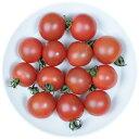 井出トマト農園謹製ミニトマト プリンセスロゼ