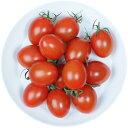 井出トマト農園謹製ミニトマト アイコ