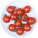 井出トマト農園謹製ミニトマト ピッコラルージュ