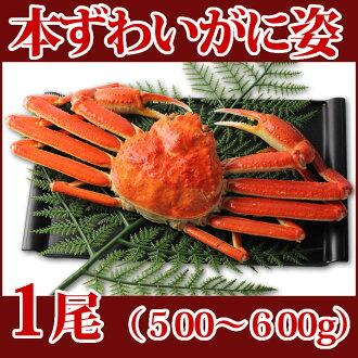 This whole crab (500 ~ 600 g ) Rakuten good tournament Shinjuku Isetan Yokohama Nagoya Takashimaya, Nihonbashi Mitsukoshi Department Store head office Hanshin Hakata Hankyu Department store