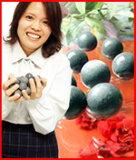 锗洗浴球] [时间] [限量锗浴球就可以买到从粮食!豪华浴球粗糙[ゲルマニウム温浴ボール ゲルマ温浴ボール 1粒から購入できます ゲルマ入浴剤 高級ゲルマ温浴ボール ゲルマニュウム温浴ボール]