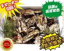 あす楽対応!お歳暮にも10kgチルド便送料無料! 宮城県松島産 殻付き牡蠣殻付き 無選