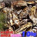 あす楽対応!牡蠣 10kg(約135粒)送料無料!宮城県産 殻付き 牡蠣 殻付き 無選別牡蠣