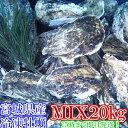 重量MIX20kg(約240粒)冷凍便送料無料! 宮城県産 殻付き牡蠣 殻付き 殻付 カキ 加熱用 一年子 松島牡蠣屋 無選別牡蠣