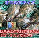宮城県産 ワタリガニ オス大サイズ 渡り蟹 ガザミ 梭子蟹 ケジャンにも!活発送 2kg(