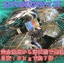 宮城県産 ワタリガニ オス特大サイズ 渡り蟹 ガザミ 梭子蟹...