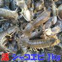 活梱包海水ごと輸送!蝦蛄海老 虾蛄 シャコエビ...