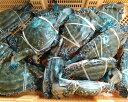 宮城県産 ワタリガニ メス 渡り蟹 ガザミ 活発送 1kg〜中小サイズ1kgで4-5杯くらいです。