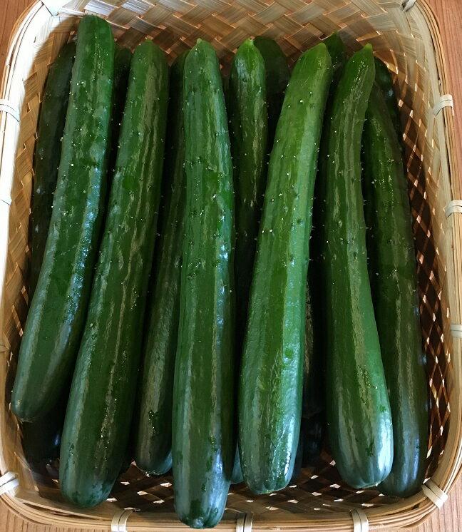 きゅうり 宮崎産【野菜セット同梱で送料無料】