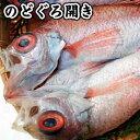 超高級魚のどぐろ一夜干し【冷凍】1枚 約100-130g程度【浜坂産】1人前にちょうど良いサイズです!!(赤睦・ノドグロ・干物・開き)