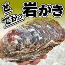 ドでか!ボンベ牡蠣(天然岩牡蠣)【生】超ビッグ 2個【鳥取産】(かき、カキ、イワ