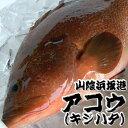 超高級魚 アコウ 1尾 約26-28cm (生冷凍・調理済み) 【浜坂産】(キジハタ、アカミズ、赤水)