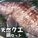 幻の高級魚 天然本クエ鍋セット【冷凍】約2〜3人前 【国産】(クエ、くえ、九絵、アラ)国内産 お歳暮に、
