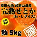 せとか 送料無料 希少柑橘 のため 数量限定! M・Lサイズ 約5kg