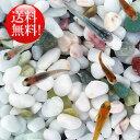 (メダカ) めだか おまかせ紀の川ミックス 未選別 稚魚(SS〜Sサイズ) 50匹セット / ミックス お買い得 淡水魚
