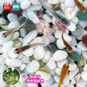 (メダカ) めだか おまかせ紀の川ミックス 未選別 稚魚(SS〜Sサイズ) 20匹セット + お