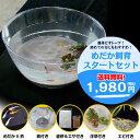 (メダカ) めだか飼育スタートセット / ミックス 鉢 水槽 水草 浮草 エサ シュリンプ メダカ 淡水魚