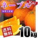 ネーブル 訳あり 10kg 和歌山県産 送料無料!(北海道、沖縄県除く) ネーブルオレンジ