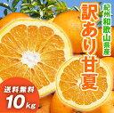 甘夏 10kg 和歌山県産 訳あり・ご家庭用 / あまなつ ...