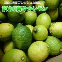レモン 5kg 国産 訳あり・ご家庭用 / 檸檬 送料無料(...