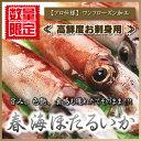 ホタルイカ 刺身用 『 【プロ仕様】 春海ほたるいか 』 蛍烏賊 イカ 烏賊