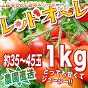 【農家直送】リコピン、ミネラルたっぷりの濃赤フルーツミディー・もぎたて・レッドオーレ!1kg トマト・ミニトマト667963