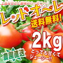 とまと まるでフルーツ♪ 【送料無料】【農家直売】 ミネラルたっぷりの濃赤フルーツ・ミディー・レッドオーレ!♪2kg ミニトマト