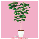 【まとめ買い10個セット品】 ウンベラータ(人工樹木) H120cm1台 【厨房館】