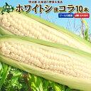 とうもろこし 送料無料 ホワイトショコラ 10本 Lサイズ 生で食べれる! 北海道 ニセコ産 朝採り 低農薬栽培 スイートコーン 白 とうきび 生食 フルーツとうもろこし クール便 冷蔵便