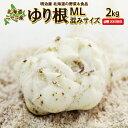 ゆり根 送料無料 2kg 北海道産 ニセコ産 高級食材 百合根 ユリ根 混みサイズ お歳暮ギフト