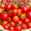 ミニトマト 送料無料 2kg あまっこ 北海道 羊蹄山麓産 野菜ギフト とまと クール便 冷蔵