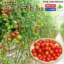 ミニトマト  1kg アイコ・キャロルス