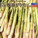 たけのこ 送料無料 根曲がり竹 5kg 生 北海道産 天然 春の山菜 タケノコ たけのこ ク