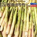 たけのこ 送料無料 根曲がり竹 1kg 生 北海道産 天然 春の山菜 タケノコ たけのこ 冷蔵便 筍