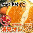 【送料無料】訳有り清見オレンジ8kg 送料無料(北海道・沖縄・一部離島+500円)和歌山有田で作ったワンランク上の訳有り清見オレンジ