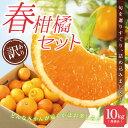 送料無料 みかん 福袋 春柑橘セット 10.0kg 訳あり ...