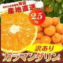 【訳あり】有田産カラマンダリン 2.5kg【2箱以上で送料無料!買えば買うほどお得な複数購入特典付】