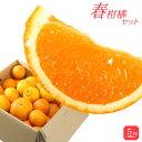 送料無料 みかん 福袋 春柑橘セット 5.0kg 訳あり 和...