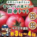 トマト 訳あり 高野さん益子さんの昔ながらの懐かしい田舎トマト 栃木県産 約3kgから4kg 送料無料