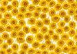 LIBERTYリバティプリント・国産タナローン生地(エターナル)<Xanthe Sunbeam>(ザンジー・サンビーム)3633151AE リバティ 生地