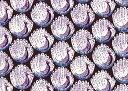 LIBERTYリバティプリント・つや消しラミネート(ビニールコーティング生地)<Peacocks of Grantham Hall>(ザ・ピーコックス・オブ・グ...