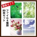【訳アリ!】クリアファイル4枚組80枚セット【のし・包装不可】【送料無料】