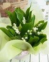 【季節限定】すずらん鉢植え9?10本 5号鉢幸せの使者 「スズランの日」「お祝」「誕生日」「スズラン