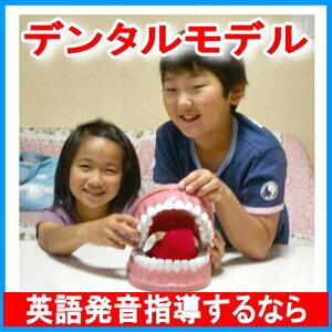 ランキング デンタルモデル 歯ブラシ おもちゃ