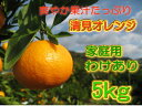 清見オレンジ 5kg ご家庭用 訳あり [創業120年農家直送]みかんの名産地和歌山県有田の農園直送