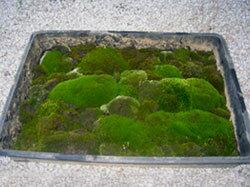 Earth Moss
