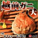 【11/6解禁!】越前ガニ(大)福井県産越前がに・蟹 約 1...